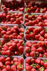 fraise en barquette de 500 g